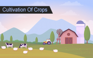 Cultivation of Crops