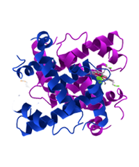 Class 11th - Proteins