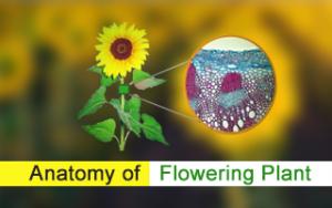 Anatomy of Floering Plant